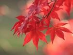 秋は顔がむくみやすいってホント? その理由と解消方法をズバリ解説!