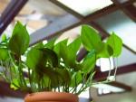 """植物のあふれるオフィスで仕事効率アップ! """"グリーンアメニティ""""の効果と取り入れ方とは"""