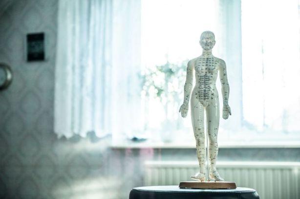 クリスタルの人体模型