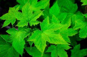 鮮やかな緑の葉っぱ