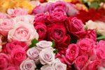12月12日は大切な人に薔薇を送る「ダズンローズデー」。薔薇の花束を贈って、あの人を笑顔にしてみては?